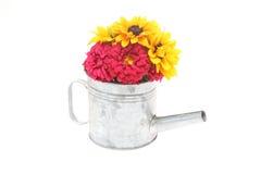 Rudbeckia et chrysanthème dans une boîte d'arrosage Photo stock