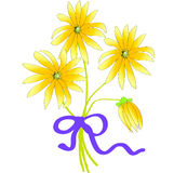 Rudbeckia flower. Illustration of Rudbeckia flowers tied with a blue bow Stock Photo