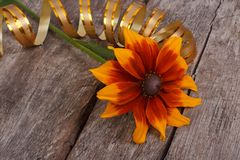 Rudbeckia flower with gold ribbon on an old wooden Royalty Free Stock Photos
