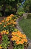 Rudbeckia in the Garden Royalty Free Stock Photography