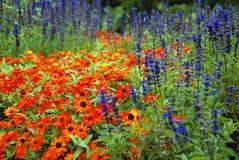 Rudbeckia garden Royalty Free Stock Images