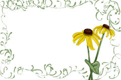 Rudbeckia with green vines. Black eyed susan/rudbeckia with green vine border Stock Photography