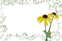 Rudbeckia met groene wijnstokken stock fotografie