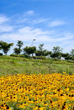Rudbeckia and tree, sky Stock Photos