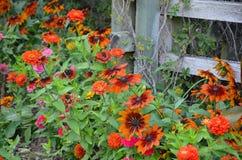 Rudbeckia and zinnia garden Royalty Free Stock Images