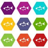 Rudd fish icon set color hexahedron. Rudd fish icon set many color hexahedron isolated on white vector illustration Stock Photos