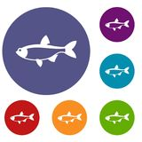 Rudd fish icons set. In flat circle reb, blue and green color for web Stock Photos