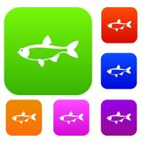 Rudd fish set collection. Rudd fish set icon in different colors isolated vector illustration. Premium collection Stock Image