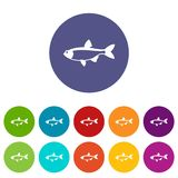 Rudd fish set icons. In different colors isolated on white background Stock Photography