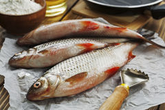 Rudd, ide. Fresh fish rudd, ide on a wooden table stock images