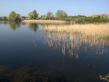 Rudd lake, Little Paxton nature reserve Royalty Free Stock Image