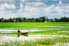 Ruderer, der vietnamesischen konischen Hut unter grünen Reisfeldern trägt Stockfotografie