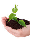 Rudern der Grünpflanze in einer Hand Stockfotografie