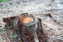 Rudern Sie die alter Schnitt getrockneten Baum-Stümpfe, die durch Abholzung, Umweltprobleme verursacht werden lizenzfreie stockbilder