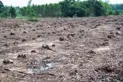 Rudern Sie die alter Schnitt getrockneten Baum-Stümpfe, die durch Abholzung, Umweltprobleme verursacht werden stockfoto