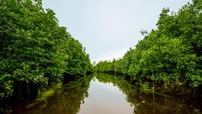 Rudern Sie ein Boot in einem Fluss durch den tiefen Wald, Abenteuerkonzept lizenzfreie stockfotografie