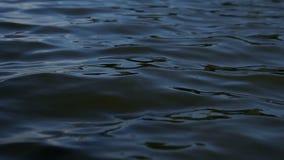 Rudersportruder im Wasser stock footage