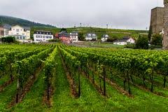 Rudesheim葡萄园  免版税图库摄影