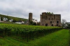 Rudesheim葡萄园  库存照片