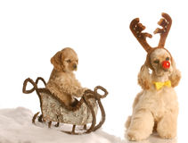 Rudolph dog pulling sleigh royalty free stock photography