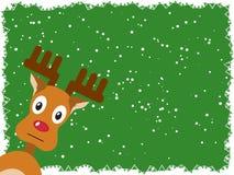 Rudolph med en grön bakgrund Arkivfoto