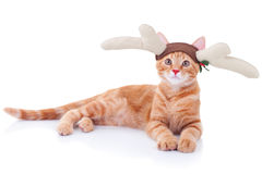 Rudolph Reindeer Cat. Funny Christmas Rudolph reindeer cat Stock Images