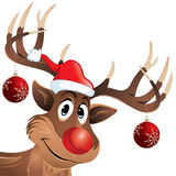 Rudolph the reindeer red nose with Christmas balls. Rudolph The Reindeer with hanging Christmas balls looking at you with a smile. He is looking very happy as Stock Photography