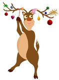 Rudolph renen Arkivbild