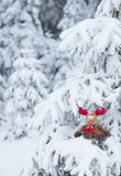 Rudolph in Snow-covered Forest. Rudolph reindeer in snow-covered pine-tree forest Royalty Free Stock Images