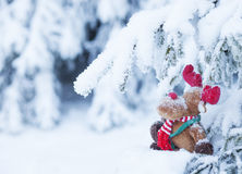 Rudolph in Snow-covered Forest. Rudolph reindeer in snow-covered pine-tree forest Royalty Free Stock Photo