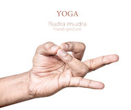 Rudra mudra. Hands in rudra mudra by Indian man isolated on white background. Free space for your text Royalty Free Stock Photo