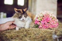 Rudzielec kot na sianie w wiosce obrazy stock