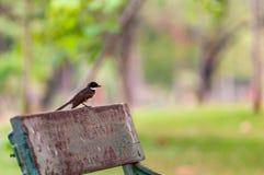 Rudzika ptak na gałąź Zdjęcia Royalty Free