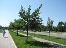 Rue à Novi Sad Images stock