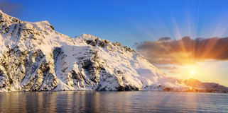 Rue antarctique la Géorgie d'îles Photo libre de droits