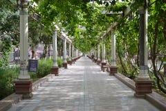 Rue avec des piliers et des usines de raisin à Turpan le Xinjiang, image libre de droits