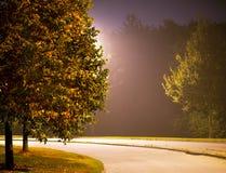 Rue avec l'arbre en soirée Photographie stock