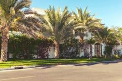 Rue avec les maisons et les palmiers blancs dans le pays du sud photos stock