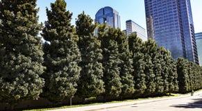 Rue bordée d'arbres au milieu du centre ville Photos stock