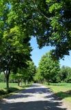 Rue bordée d'arbres avec des feuilles formant un coeur au-dessus de la route Photo stock