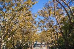 Rue bordée d'arbres dans un voisinage résidentiel un jour ensoleillé d'automne Photographie stock