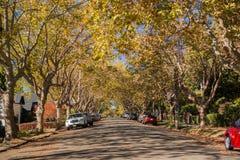 Rue bordée d'arbres dans un voisinage résidentiel un jour ensoleillé d'automne Images libres de droits