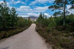 Rue dans les bois photographie stock