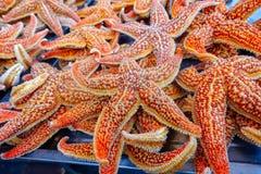 Rue de casse-croûte dans Pékin Chine Casse-croûte rôti d'étoiles de mer Images stock