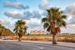 Rue de palmiers Photo libre de droits