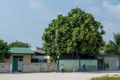 Rue de village avec les bâtiments, la route, les vélos et l'arbre locaux pendant le jour ensoleillé situé à l'île tropicale Maami Photos libres de droits