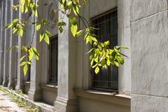 Rue de ville - branches d'un arbre avec des feuilles de vert en Front Of A Images stock