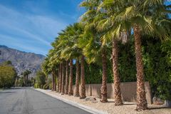 Rue de voisinage dans le Palm Springs photo stock