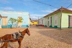 Rue du Trinidad avec le cheval Images libres de droits