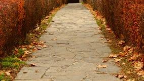 Rue en automne Image stock